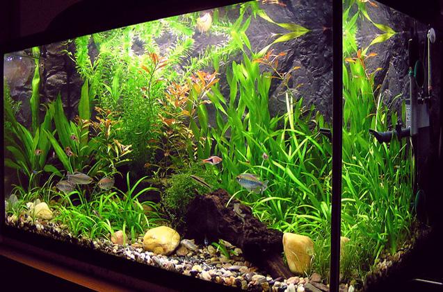 Аквариум с неприхотливыми растениями