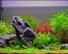 Живые и искусственные растения в аквариуме