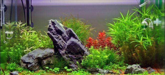 Растения и камни в аквариуме