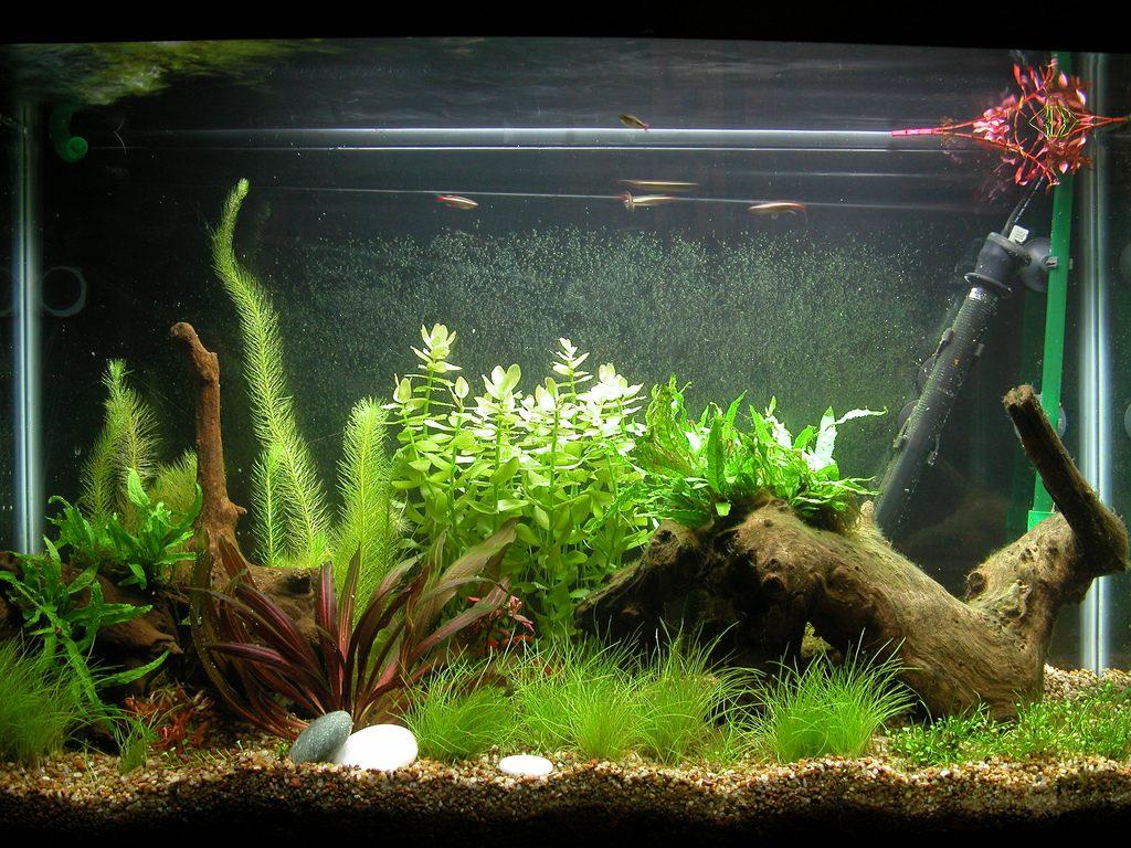 Пример оформления аквариума различными растениями и элементами декора