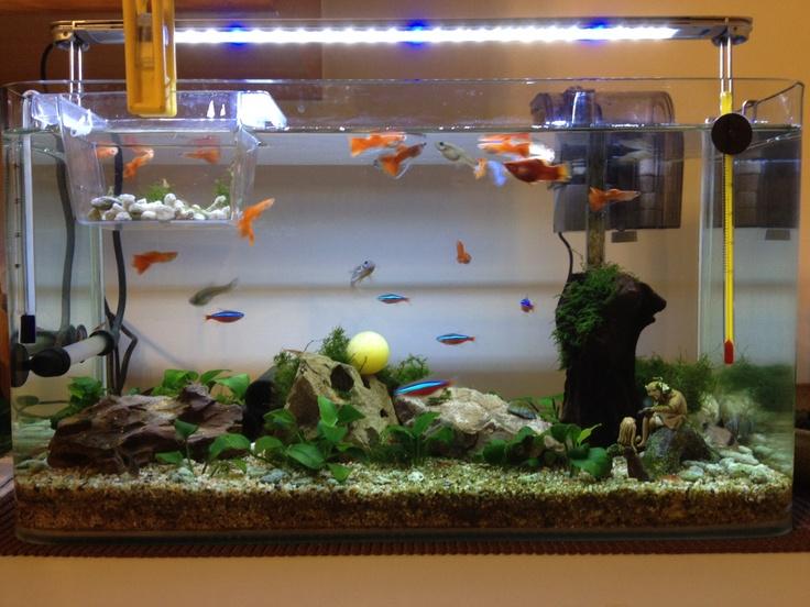 Пример организации аквариума с гуппи