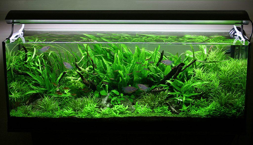 Неплохой вариант декорирования аквариума зеленью