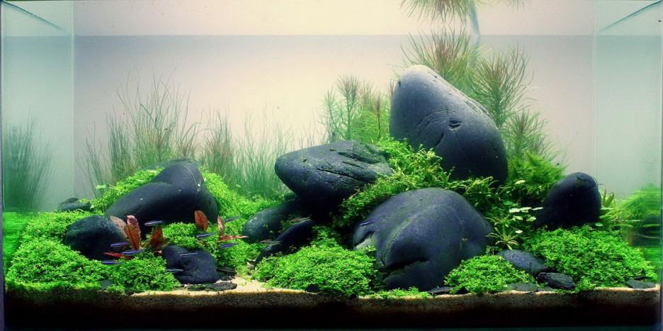 Возможный вариант декорирования аквариума камнями
