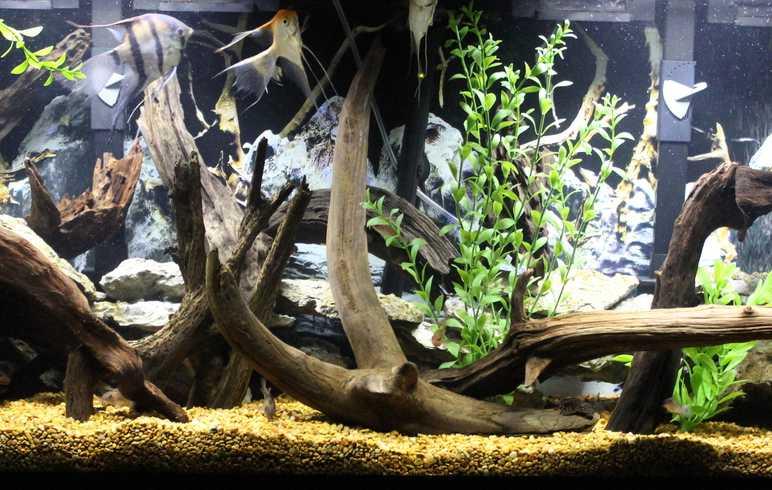 Декор аквариума деревом